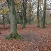 Beech woodland, Crickley Hill