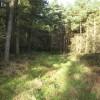 Woodland Ride.