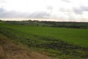 Autumn sown crop field