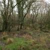 Swampy woodland, Torridge valley