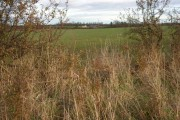 Hedge and Lodge Farm