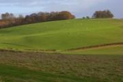 Pasture, Hailey