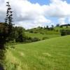 Pasture above Bryn-Elen-ganol