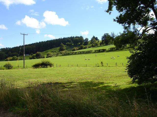 Pasture above Cyfronydd Station