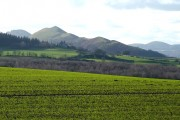 Cropfield and Hillside. near Acton Burnell, Shropshire