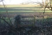 Winter wheat field near Bransford