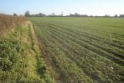 Winter wheat field near Leigh