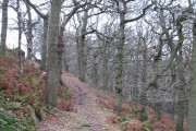 Dallowgill oakwoods