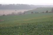 A field of neeps