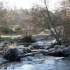 Fallen trees on the River East Allen