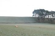 Sheep, Noblehall