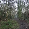 Woods behind the cemetery, Hull
