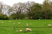 Farmland in the vicinity of Totterdown
