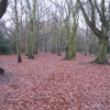 Hearsall Common, Christmas 2007