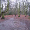 Hearsall Common, wet underfoot