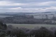 Woodland near Apperley Dene