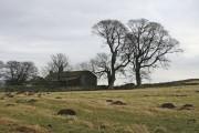 Molehills in a field at Snapegate