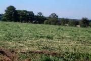 Hayfield hemp field