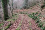 Track in Blinsham Wood