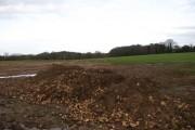 Sugar beet was harvested here