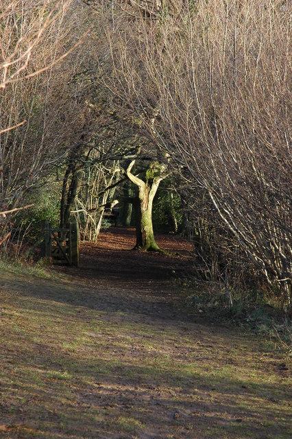 Footpath on Crickley Hill