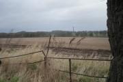 Across the fields to Boarpit Rough