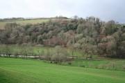 Yealmpton: towards Treby Wood