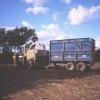 Forage Harvester, Alderton.