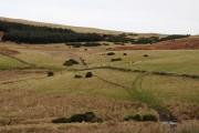 Farmland with sheep