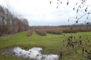 Wellbrook Farm from Brenley Lane