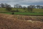 Farmland near Eight Oaks Farm, Castlemorton