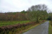 Woodland at Buckland