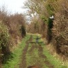Footpath lined with Hedges