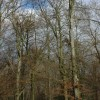 Buckholt Wood, Cranham