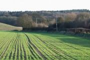 Crop Fields near Halfpenny Green, Staffordshire