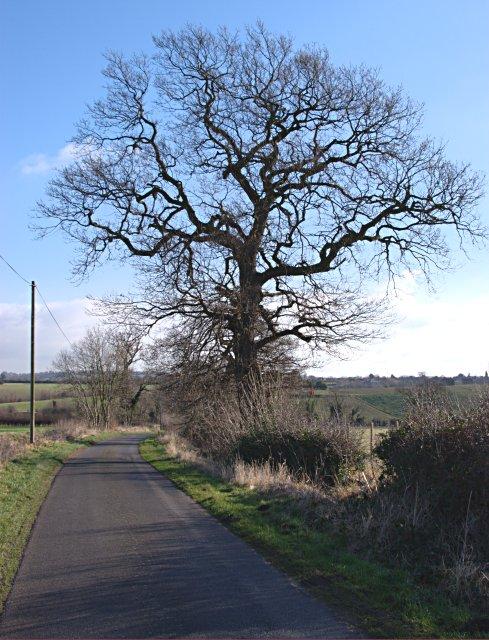 Tree beside Wood End Lane