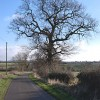 Tree beside Wood End Lane