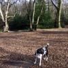 West Heath woods