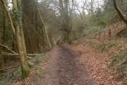 Walk through Craig y Merchant  woods