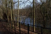 Woodland and River Kelvin