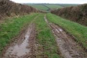 Field access track near Nethercott