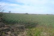 Open Farmland near Scarcliffe