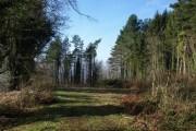 Webberton Wood