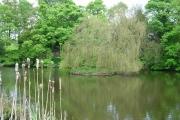 North Dalton village pond