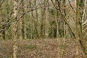 Hartnoll Wood, Bittadon
