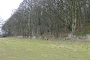 Enclosed woodland