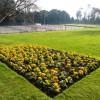 Oldway Mansion Garden, Paignton, fine Spring primulas