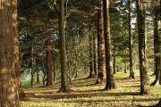 Woodland, Dartington Hall Gardens