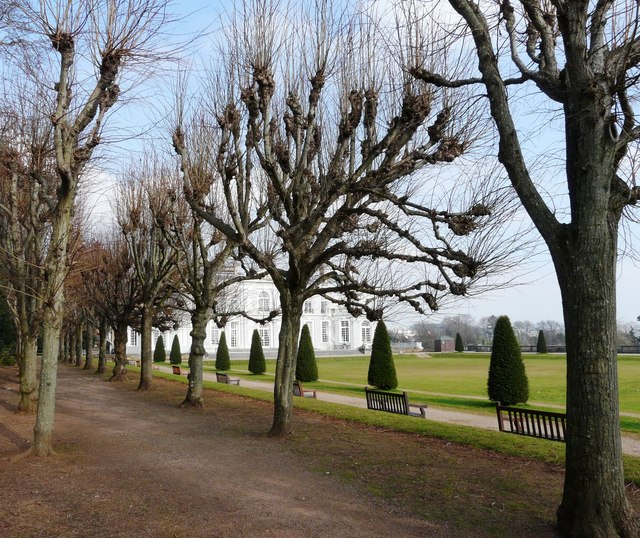 Pollarded trees, Oldway mansion, Paignton