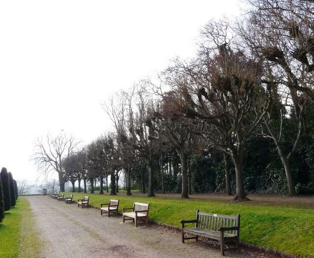 Tree lined avenue, Oldway mansion, Paignton